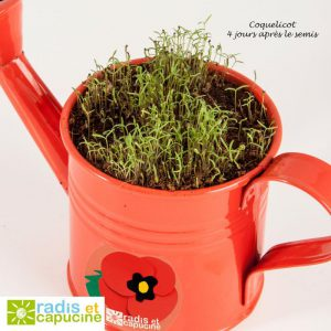 Watering can - red
